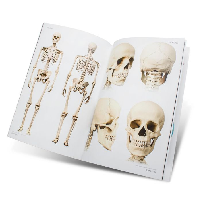 Libro Skull & Bones - Templates for Artists
