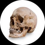 Teschi da Riferimento di Skull Shoppe